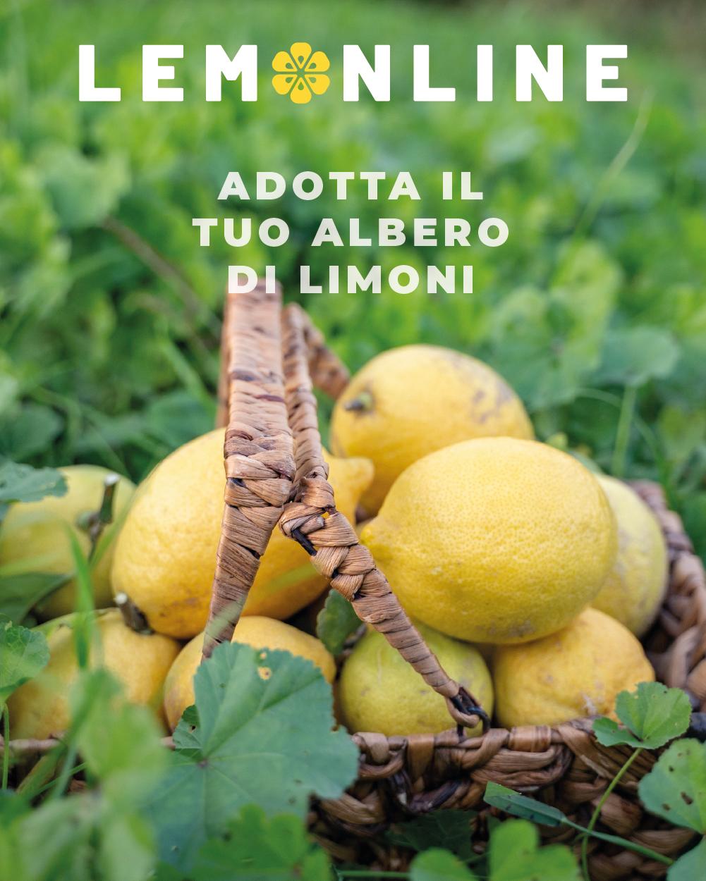 adotta un limone